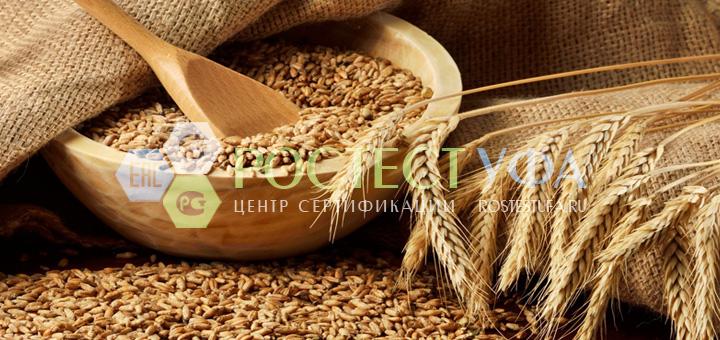 зерно1